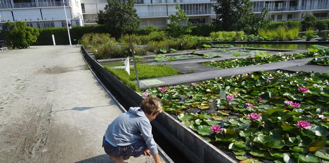 Oikos acmv une association de botanique de bordeaux for Appartement bordeaux jardin botanique